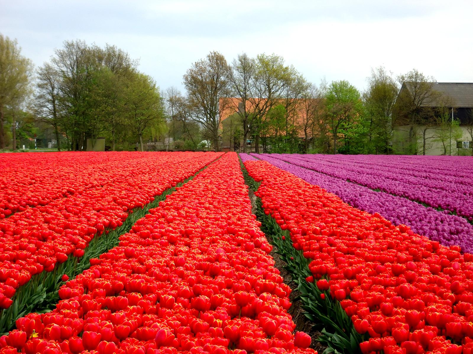 Kou zorgt voor kleurrijke lente