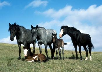 Mishandeling paarden ook in De Goorn, Wognum en Ursem