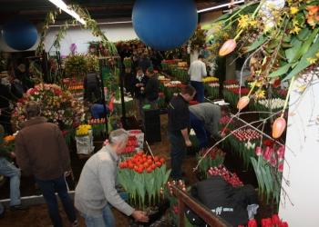 Bolbloemenshow Drieban Flora 2015; Een Werelds Bolwerk (update)