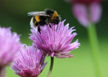 Tips voor meer natuur in uw tuin of op het balkon
