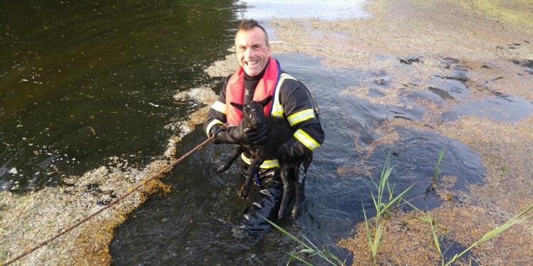 Brandweer Andijk zet schaapjes weer op het droge
