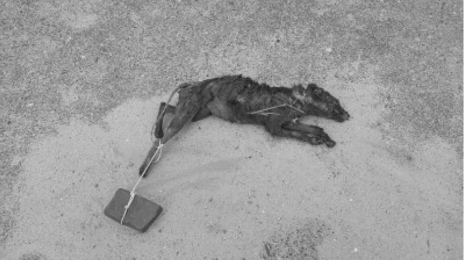 Dode vos in Andijk
