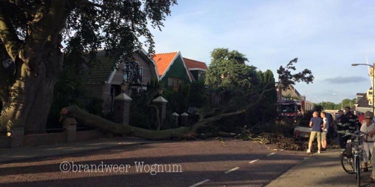 Tak van monumentale beuk blokkeert Raadhuisstraat Wognum