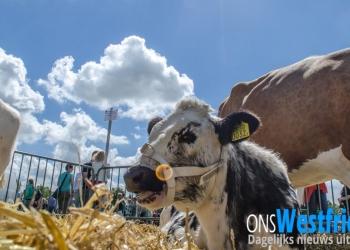 Landbouwshow Opmeer 2016: Dieren, machines en zon [foto's+video]