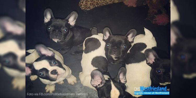 Acht puppy's in beslag genomen bij handelaar