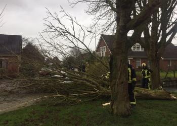 Dijk Enkhuizen-Lelystad dicht en bomen op de weg (update)