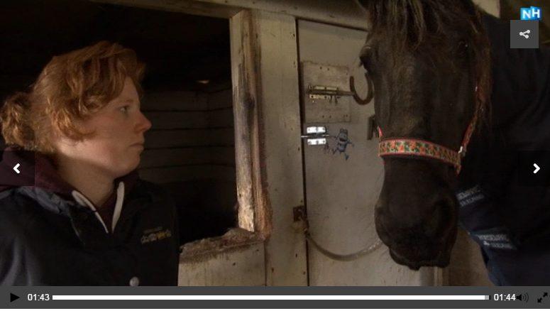 Paard gewond na inbraak; Roos Blokdijk 'Dit lijkt op verkrachting'