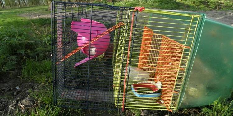 Kooi met daarin tamme rat gedumpt bij Egboetswater