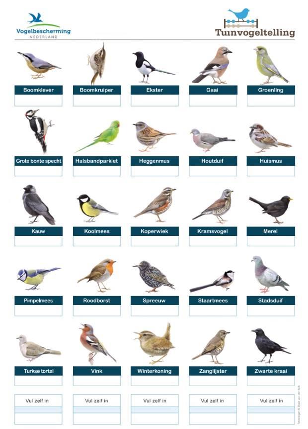 Welke vogel zit het meest in de Westfriese tuinen?