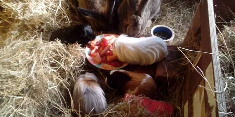 Getuigen gezocht van diefstal dieren bij kinderboerderij