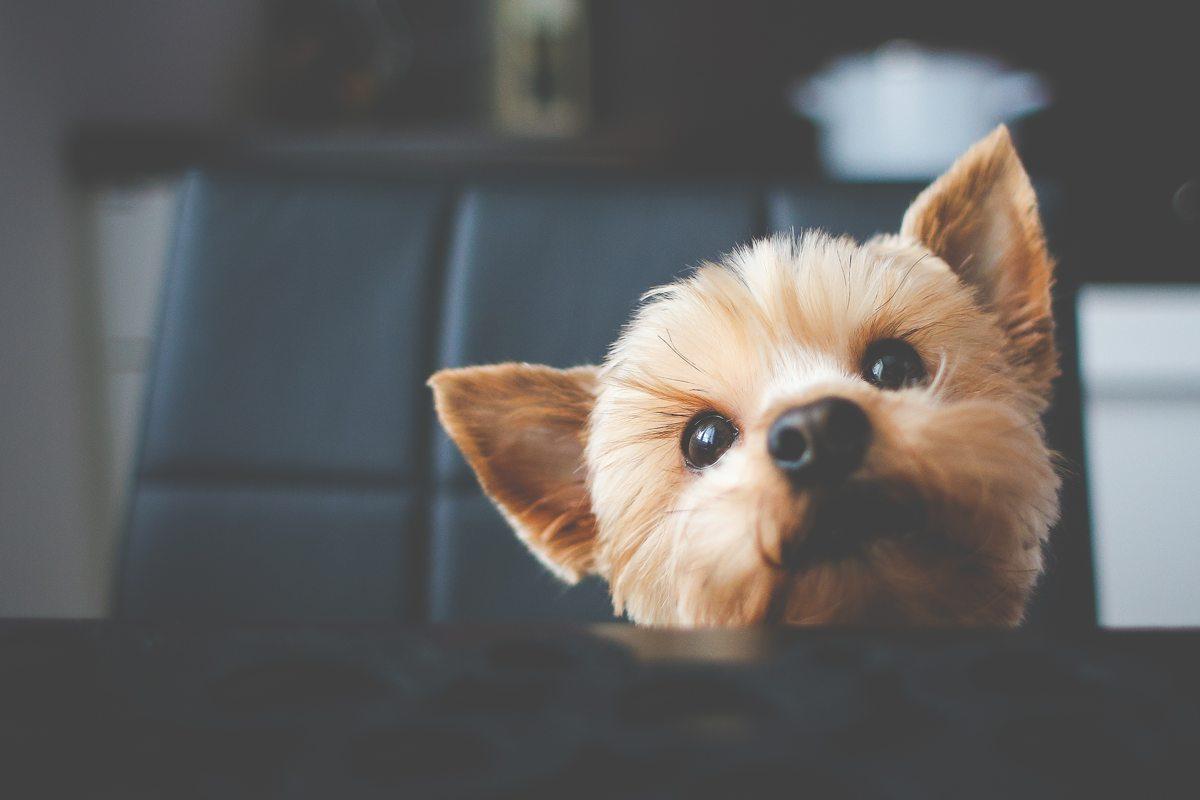 Bureau gaat controleren op hondenbezit