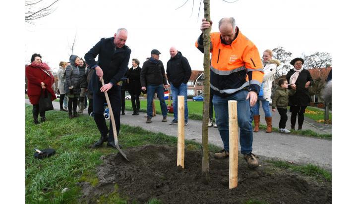 Burgemeester Eduard van Zuijlen plant resistente Iep