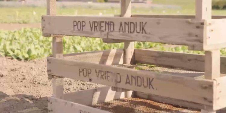 Pop Vriend Seeds uit Andijk overgenomen door Duitse KWS Saat