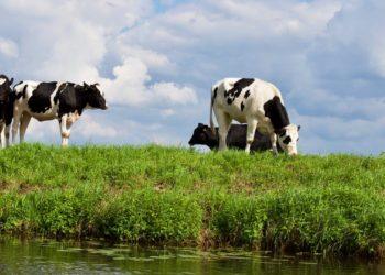 Nazomeren in Recreatieschap West-Friesland