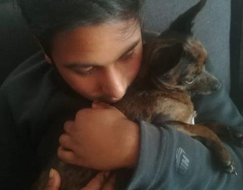 Hond Ramses vermist (update)