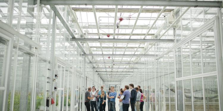 Seed Valley: bloeiende kraamkamer van de wereld groeit in omzet en werkgelegenheid