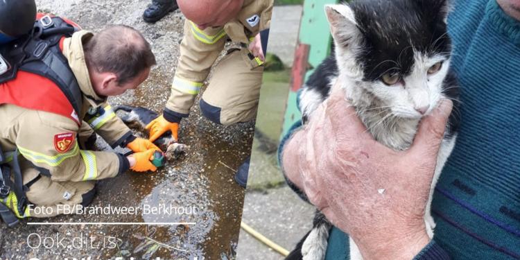 Katje overleefd val in mestput door reanimatie brandweer