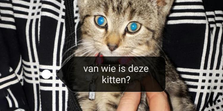 Vijf jonge katjes gedumpt in berm in Hauwert; Getuigen gezocht