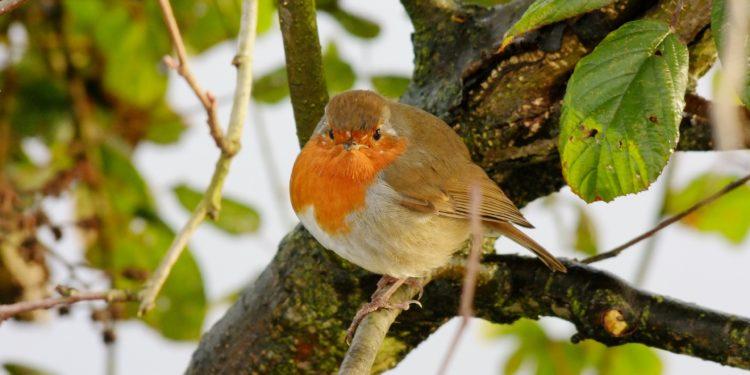 MAK Blokweer helpt je de vogels de winter door te helpen