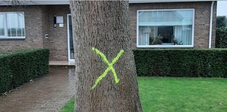 Drechterland start kap van bomen met 'geel kruis'