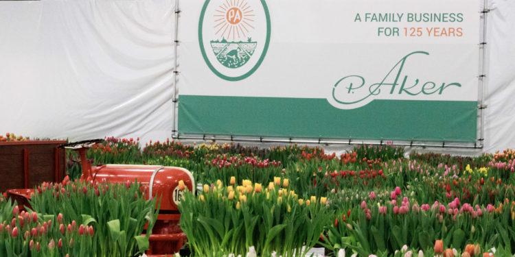 Tulpenplukdag voor Prinses Máxima Centrum in Venhuizen