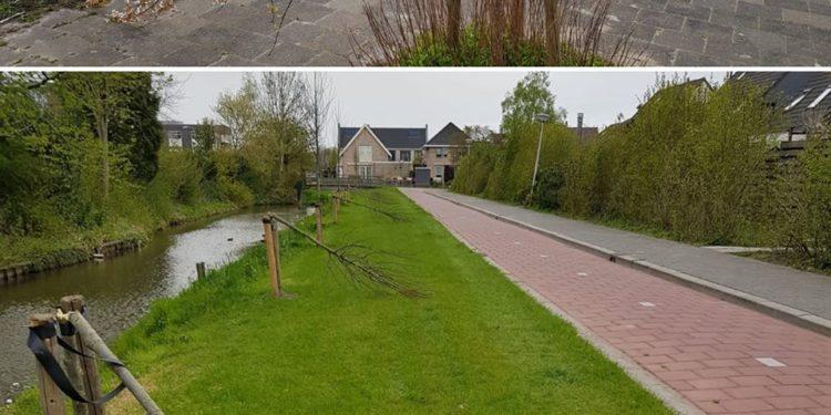 Zeven boompjes vernield in Wervershoof; Gemeente zoekt daders