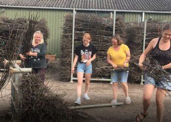 Ook een perenboompje in de tuin?; Gratis ophalen voor inwoners