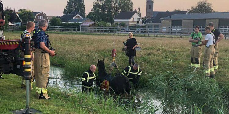 Brandweer haalt paard weer op het droge in Spanbroek