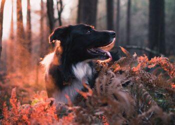 Jachthondenexamens in delen Streekbos kunnen gepaard gaan met knallen