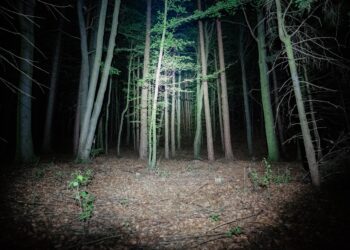 Met vogelgids op een avontuurlijke wandeling in het donker