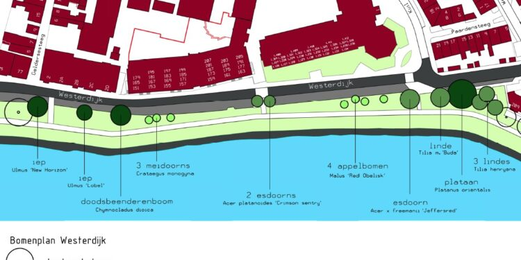 Na de kap bomen Westerdijk; '18 nieuwe bomen ingericht als een parkstrook'