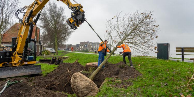 Eerste 15 van totaal 20 nieuwe bomen gepland aan Westerdijk