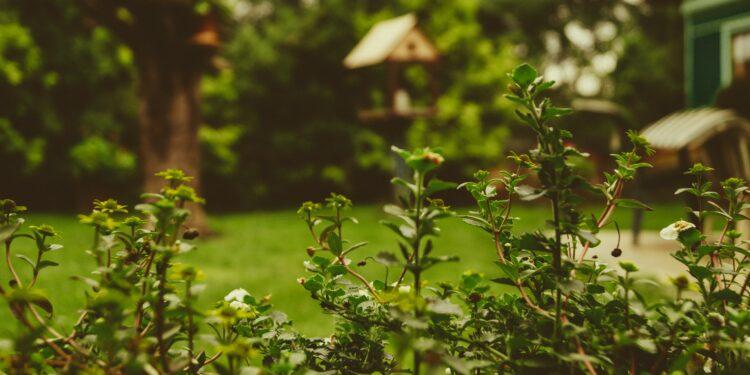 Online je tuin vergroenen, eigen jungle of eetbare tuin maken