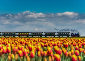 Via fotowedstrijd '#deeljouwtulp' krijgen de tulpenvelden toch hun (internationale) aandacht
