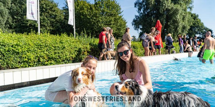 Zonnige hondenplons in De Wijzend in Zwaag, de meeste honden genieten van het zwemwater [foto's]