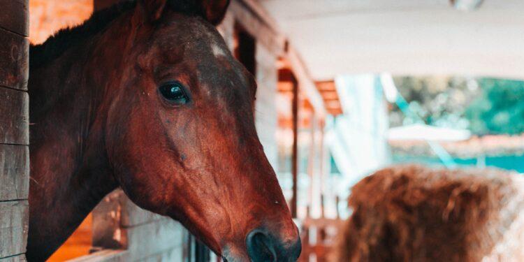 Vereniging Paardrijden voor Gehandicapten stapt weer op het paard in Wijdenes