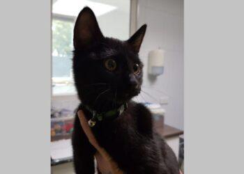 Van wie is deze zwarte kat? Kat gedumpt in doos bij tankstation