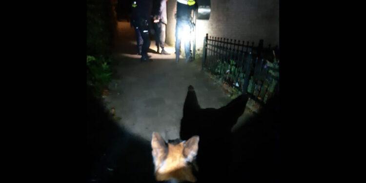 Politiehonden en helikopter leiden tot aanhouding bij nachtelijke inbraak Obdam